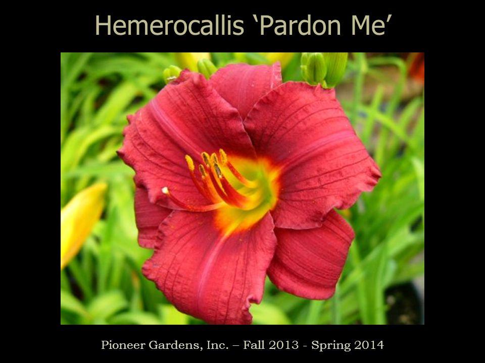 Hemerocallis Pardon Me Pioneer Gardens, Inc. – Fall 2013 - Spring 2014