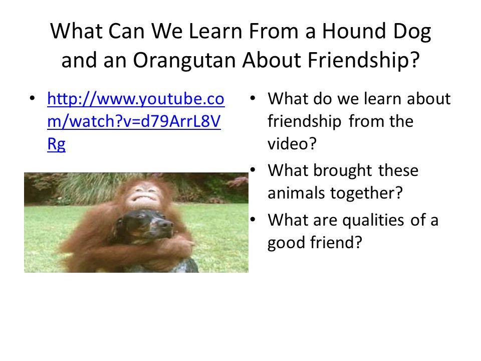 What Can We Learn From a Hound Dog and an Orangutan About Friendship? http://www.youtube.co m/watch?v=d79ArrL8V Rg http://www.youtube.co m/watch?v=d79