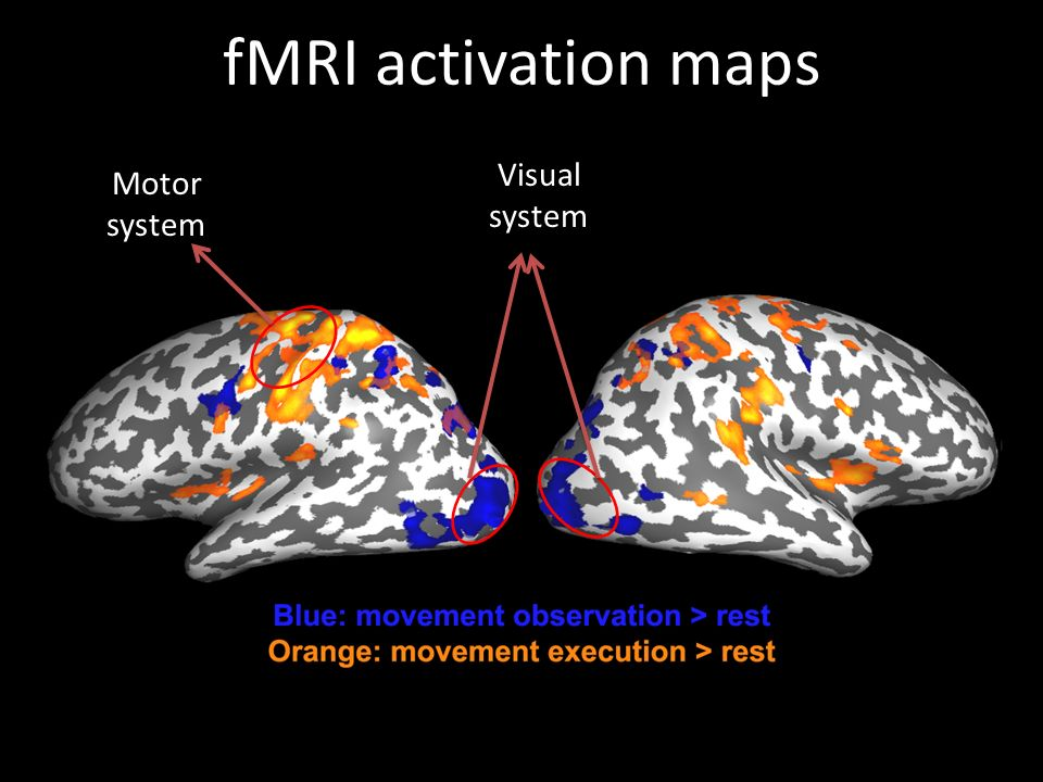 fMRI activation maps Motor system Visual system