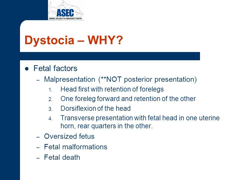 Dystocia - Signalment Primiparous bitches < 2 years old.