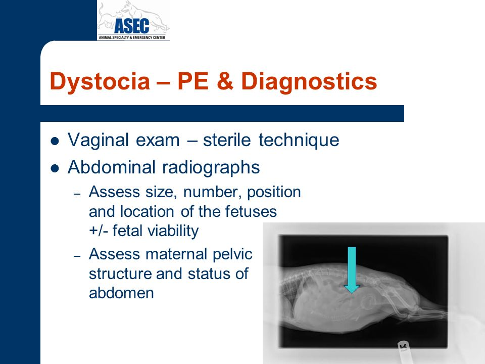 Dystocia – PE & Diagnostics Vaginal exam – sterile technique Abdominal radiographs – Assess size, number, position and location of the fetuses +/- fet