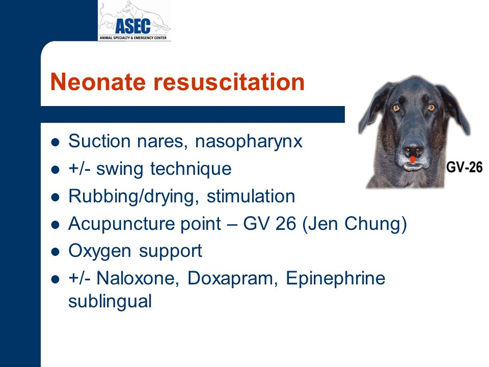 Neonate resuscitation Suction nares, nasopharynx +/- swing technique Rubbing/drying, stimulation Acupuncture point – GV 26 (Jen Chung) Oxygen support