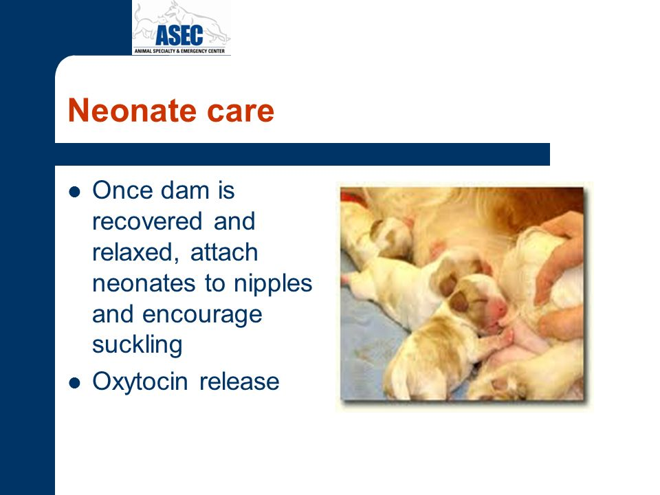 Neonate care Once dam is recovered and relaxed, attach neonates to nipples and encourage suckling Oxytocin release