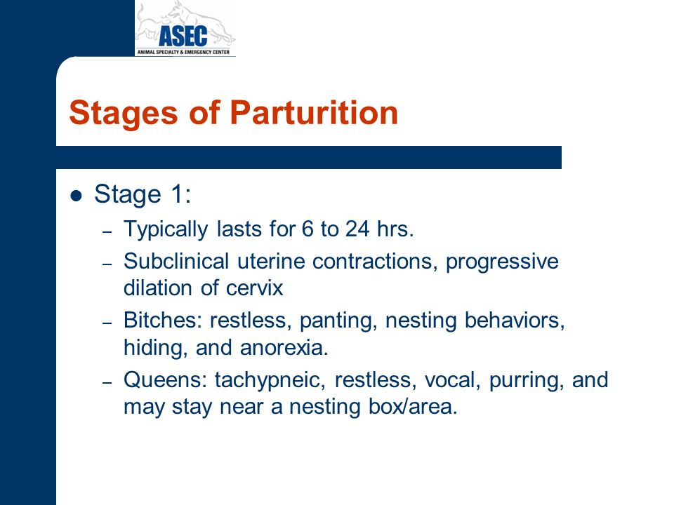 Stages of Parturition Stage 2: – Active expulsion of the fetuses – First fetus delivered within 1 hr.