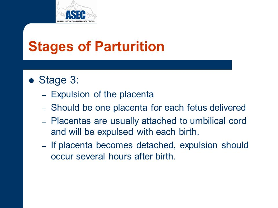 Stages of Parturition Stage 3: – Expulsion of the placenta – Should be one placenta for each fetus delivered – Placentas are usually attached to umbil