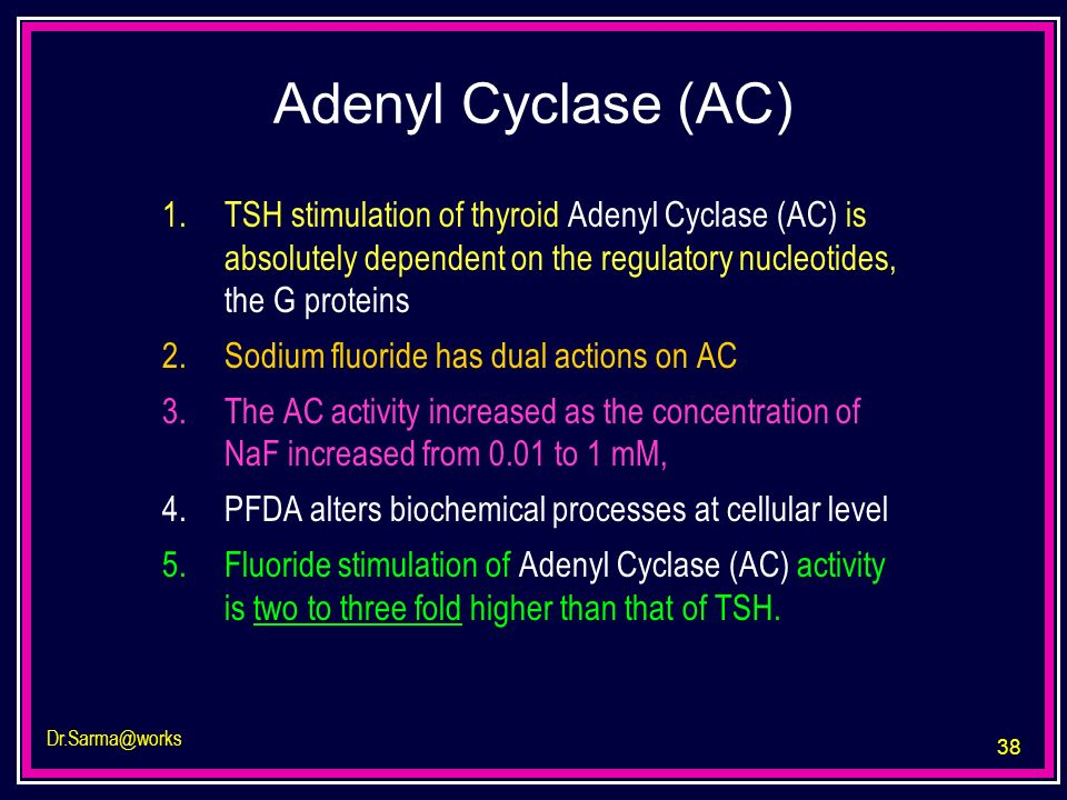 38 Dr.Sarma@works Adenyl Cyclase (AC) 1.TSH stimulation of thyroid Adenyl Cyclase (AC) is absolutely dependent on the regulatory nucleotides, the G pr
