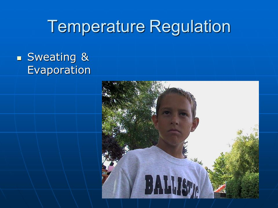 Temperature Regulation Sweating & Evaporation