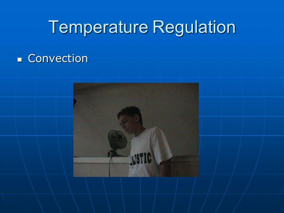Temperature Regulation Sweating & Evaporation