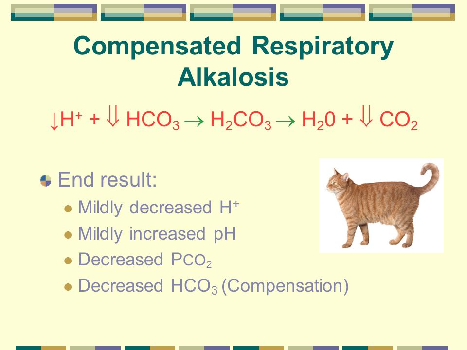 Compensated Respiratory Alkalosis H + + HCO 3 H 2 CO 3 H 2 0 + CO 2 End result: Mildly decreased H + Mildly increased pH Decreased P CO 2 Decreased HC