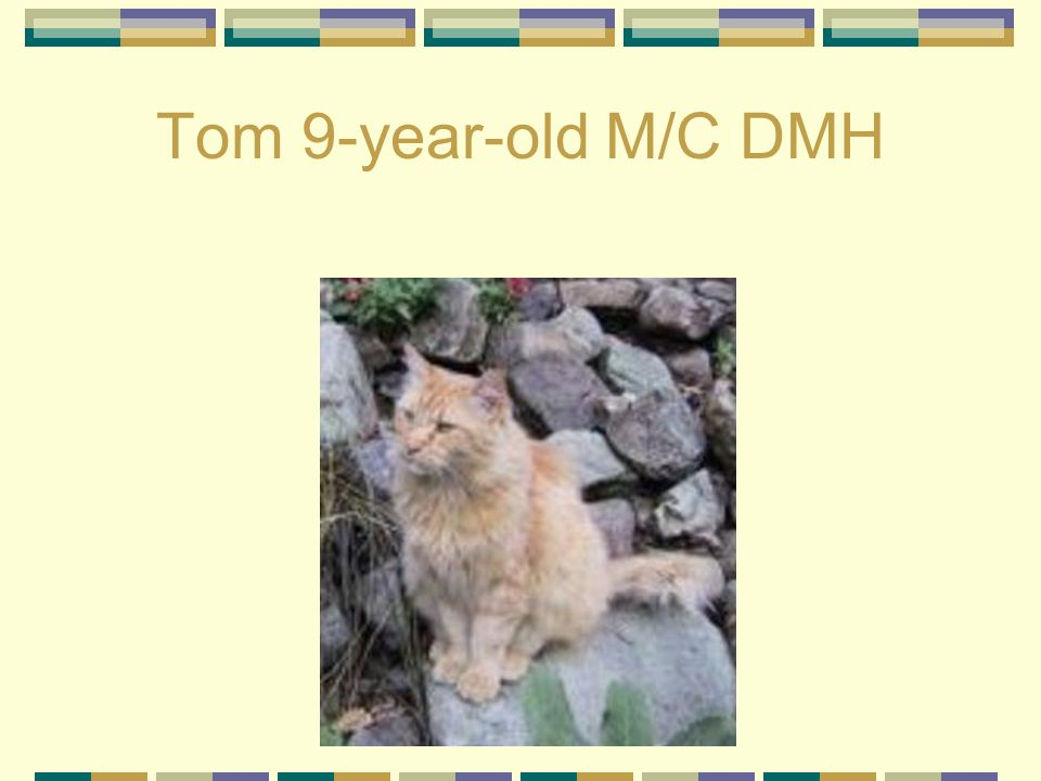 Tom 9-year-old M/C DMH