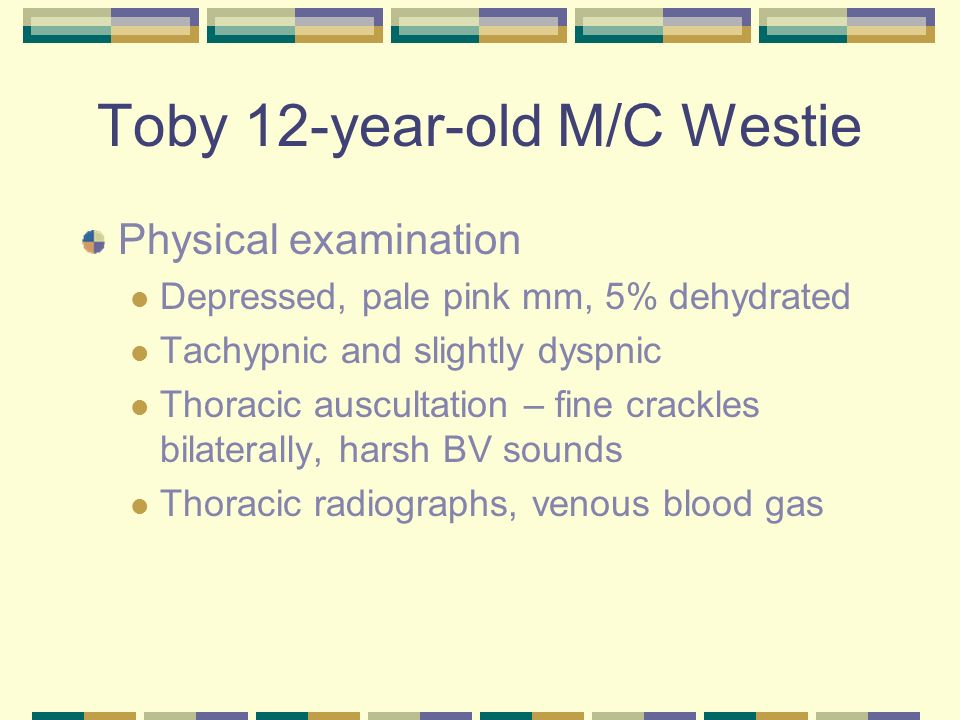 Toby 12-year-old M/C Westie Physical examination Depressed, pale pink mm, 5% dehydrated Tachypnic and slightly dyspnic Thoracic auscultation – fine cr