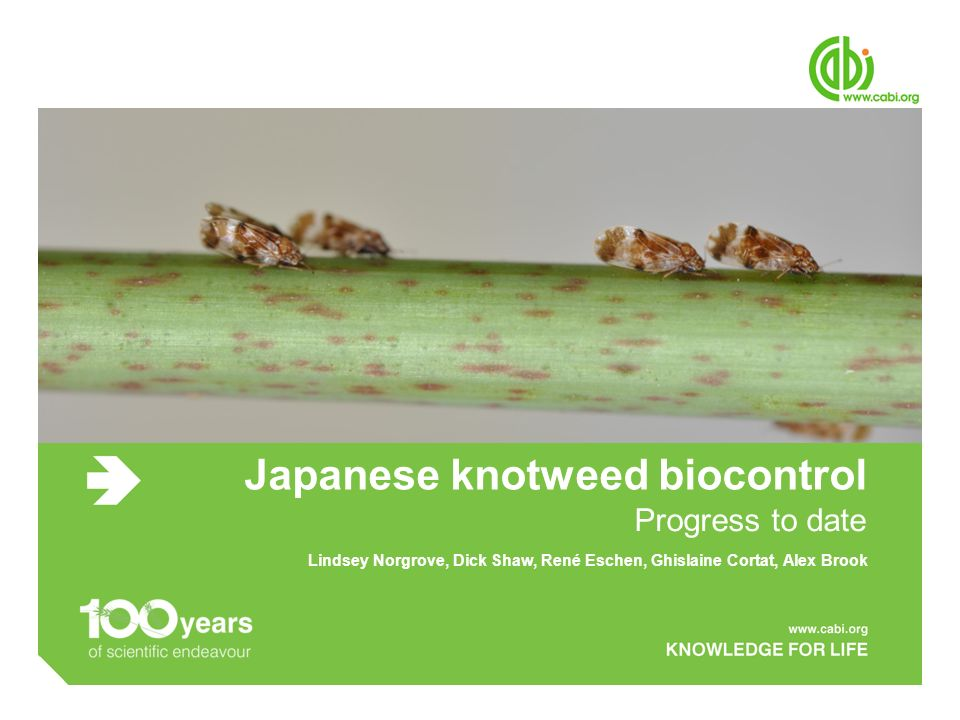 Japanese knotweed biocontrol Progress to date Lindsey Norgrove, Dick Shaw, René Eschen, Ghislaine Cortat, Alex Brook
