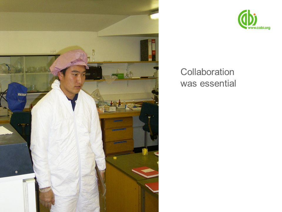 Collaboration was essential