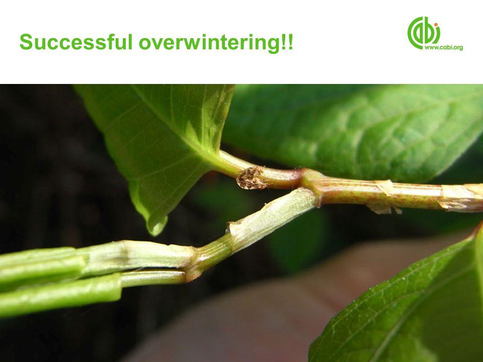 Successful overwintering!!