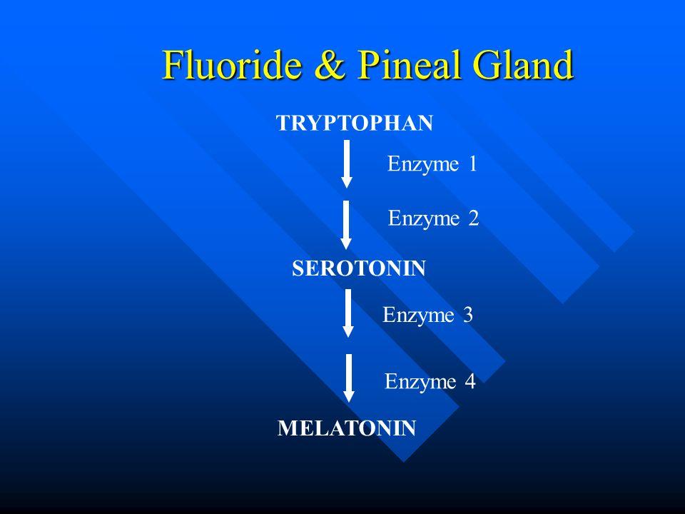 Fluoride & Pineal Gland TRYPTOPHAN SEROTONIN MELATONIN Enzyme 1 Enzyme 2 Enzyme 4 Enzyme 3