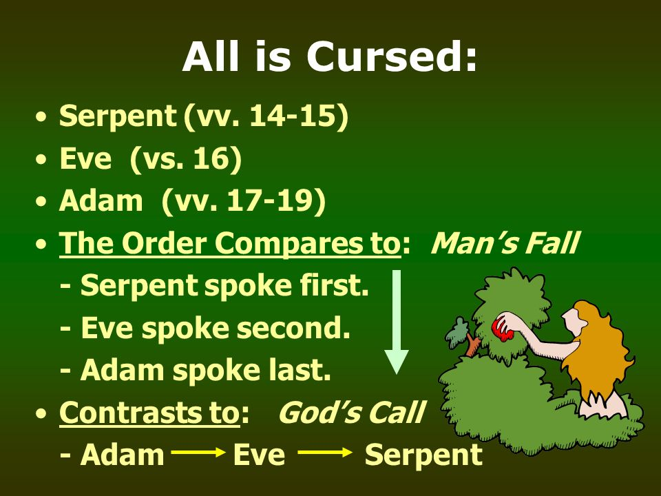 All is Cursed: Serpent (vv. 14-15) Eve (vs. 16) Adam (vv. 17-19) The Order Compares to: Mans Fall - Serpent spoke first. - Eve spoke second. - Adam sp
