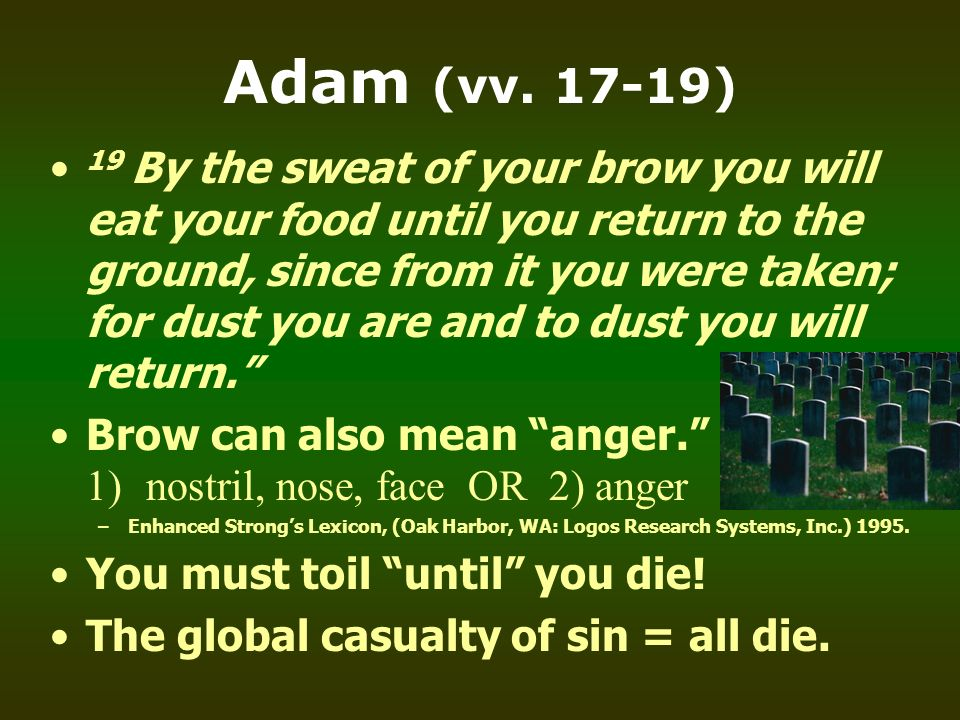 Adam (vv. 17-19) 19 By the sweat of your brow you will eat your food until you return to the ground, since from it you were taken; for dust you are an
