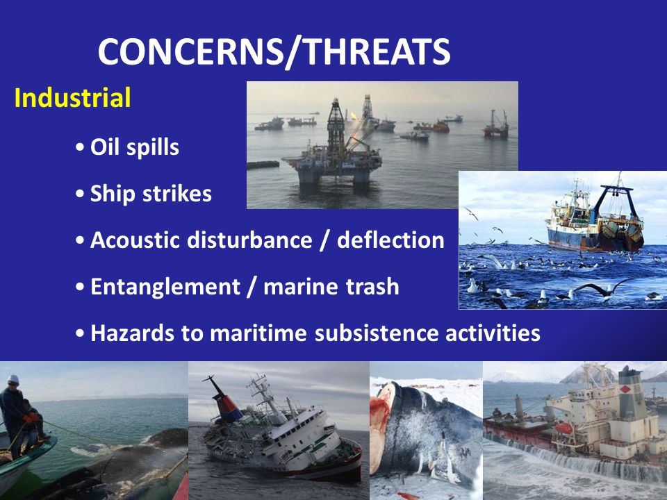 Industrial Oil spills Ship strikes Acoustic disturbance / deflection Entanglement / marine trash Hazards to maritime subsistence activities CONCERNS/T