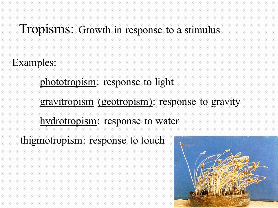 Asexual Reproduction in Plants Vegetative propagation: A root or stem can become a new plant Examples: - cuttings: using part of stem or root - runner