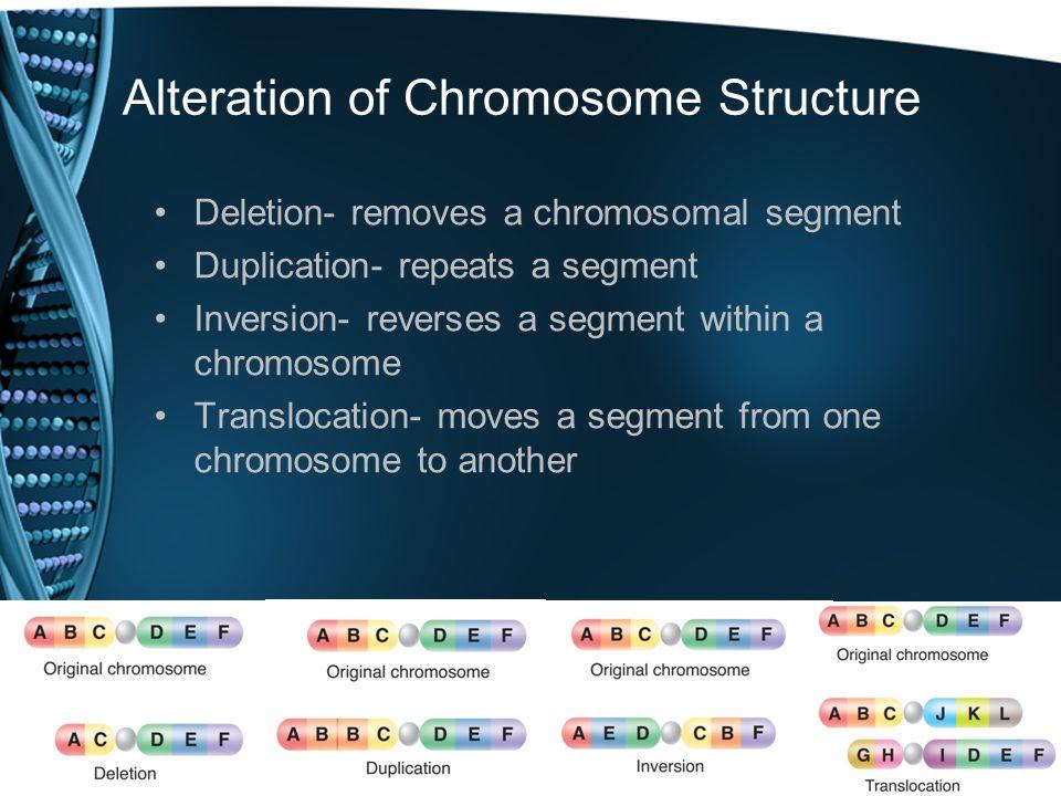 Alteration of Chromosome Structure Deletion- removes a chromosomal segment Duplication- repeats a segment Inversion- reverses a segment within a chrom
