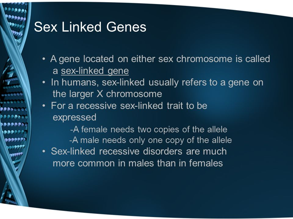Sex Linked Genes A gene located on either sex chromosome is called a sex-linked gene In humans, sex-linked usually refers to a gene on the larger X ch