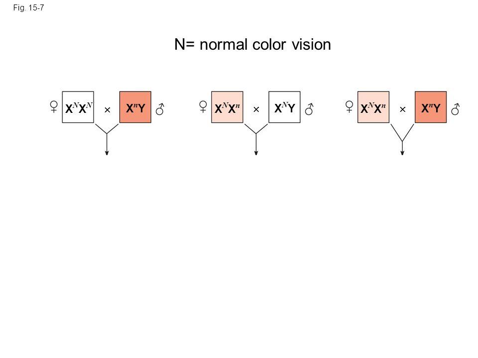 Fig. 15-7 XNXNXNXN XnYXnY XNXnXNXn XNYXNY XNXnXNXn XnYXnY N= normal color vision