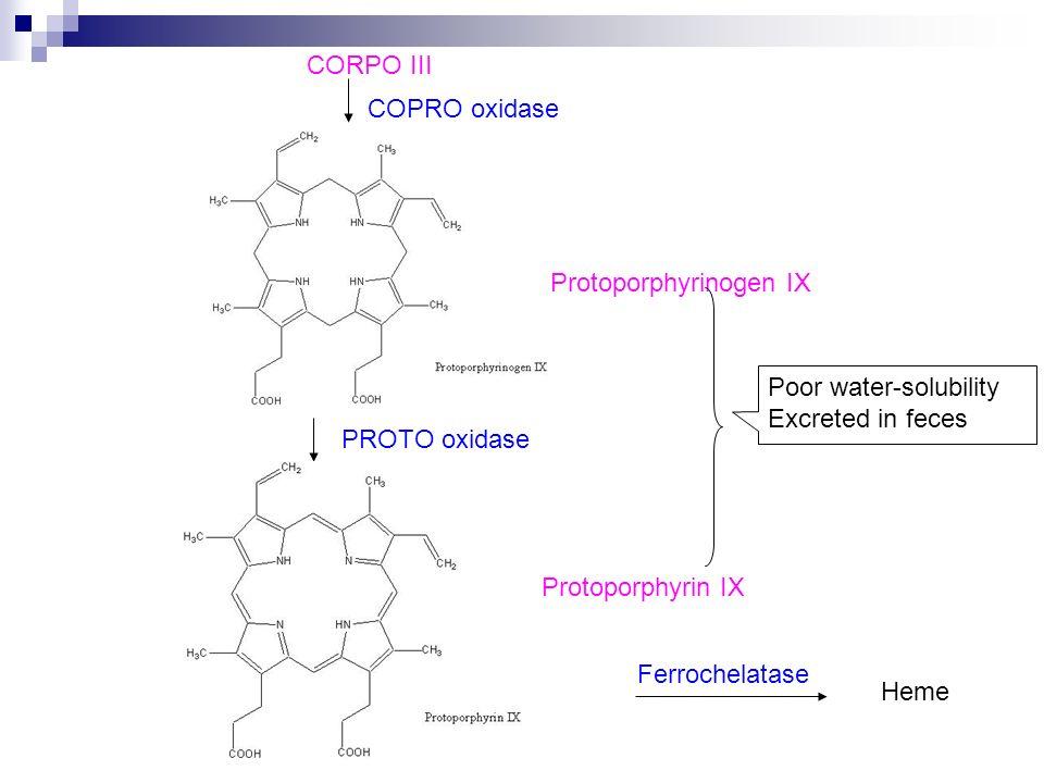 CORPO III Protoporphyrinogen IX COPRO oxidase PROTO oxidase Protoporphyrin IX Ferrochelatase Heme Poor water-solubility Excreted in feces
