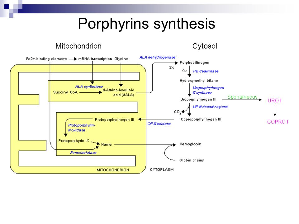 Porphyrins synthesis URO I Spontaneous COPRO I MitochondrionCytosol