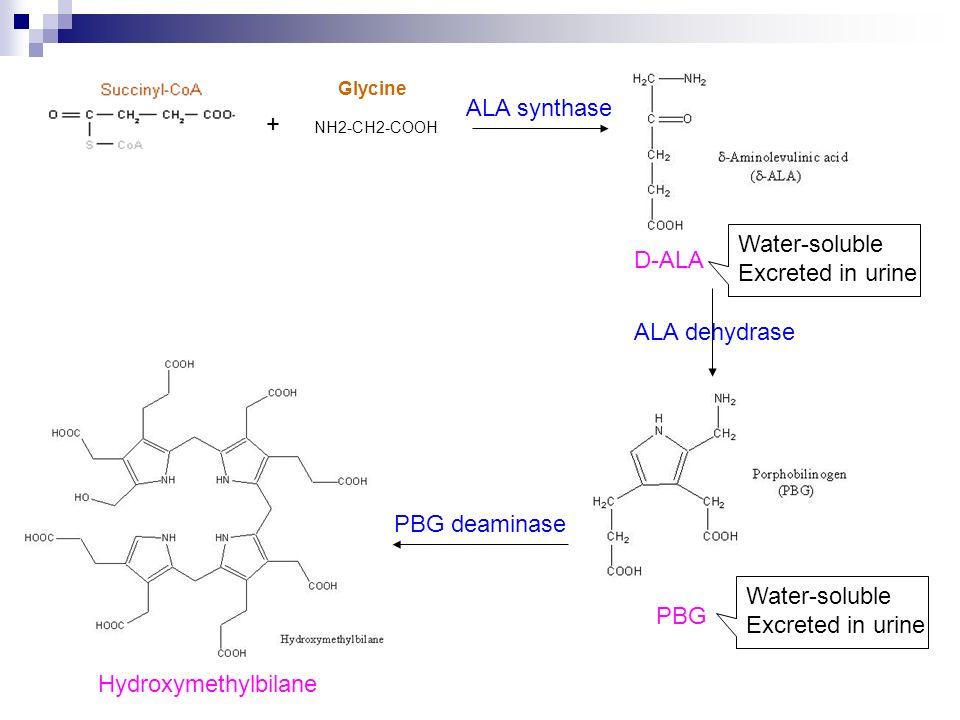 ALA synthase D-ALA ALA dehydrase PBG deaminase Hydroxymethylbilane NH2-CH2-COOH + Glycine PBG Water-soluble Excreted in urine Water-soluble Excreted i