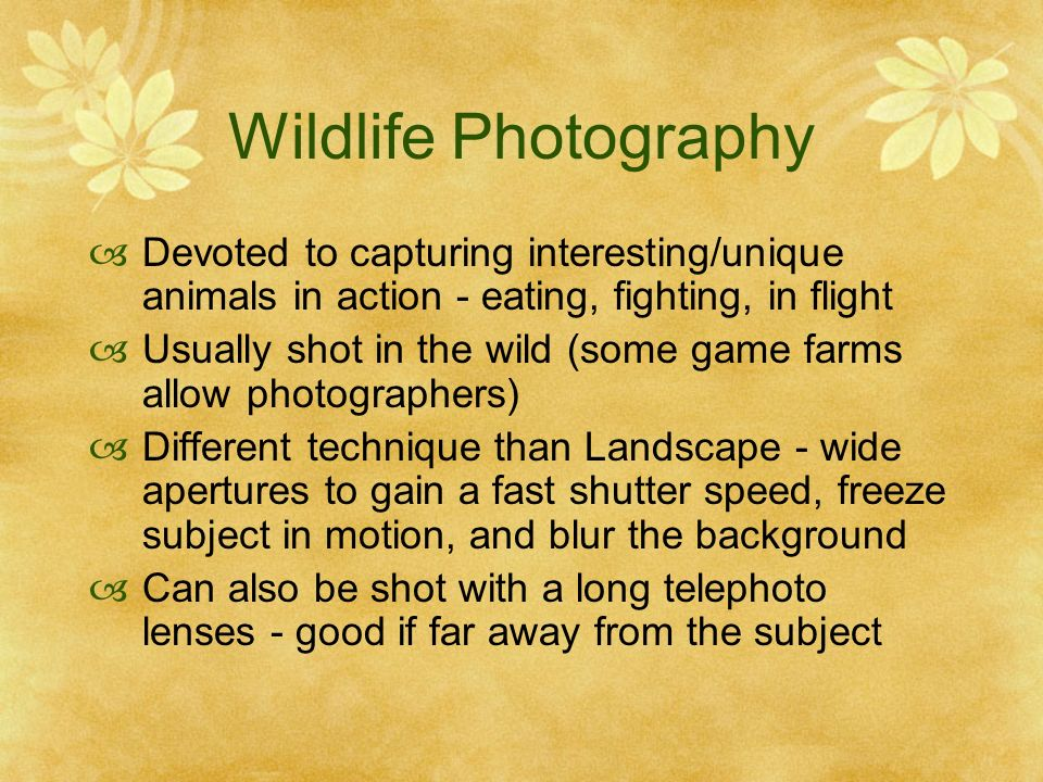 Wildlife Photography Devoted to capturing interesting/unique animals in action - eating, fighting, in flight Usually shot in the wild (some game farms allow photographers) Different technique than Landscape - wide apertures to gain a fast shutter speed, freeze subject in motion, and blur the background Can also be shot with a long telephoto lenses - good if far away from the subject