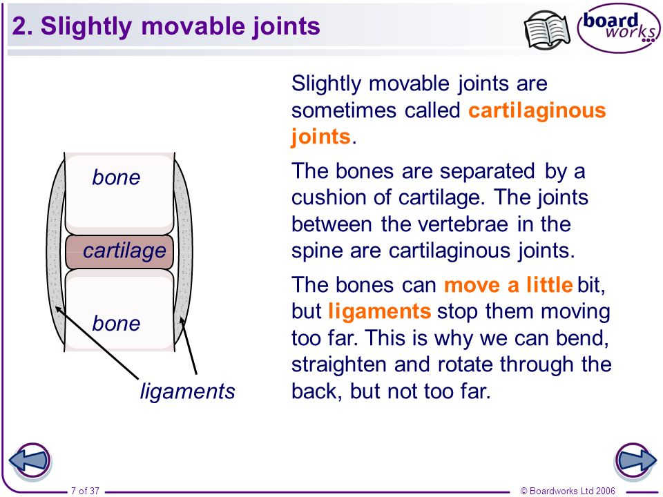 © Boardworks Ltd 20067 of 37 2. Slightly movable joints Slightly movable joints are sometimes called cartilaginous joints. The bones are separated by