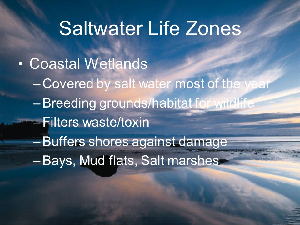 Saltwater Life Zones Coastal Wetlands –Covered by salt water most of the year –Breeding grounds/habitat for wildlife –Filters waste/toxin –Buffers sho