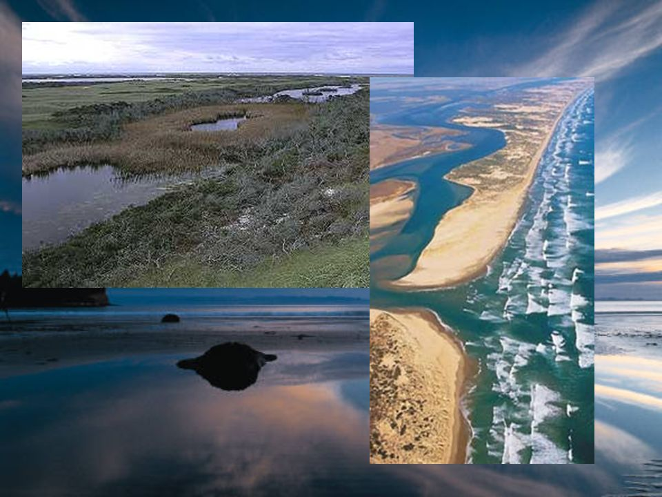 Saltwater Life Zones Rocky and Sandy Shores –Intertidal Zone Between low and high tide –Rocky shores Pounded by waves, but still lots of life –Barrier beaches Life must dig