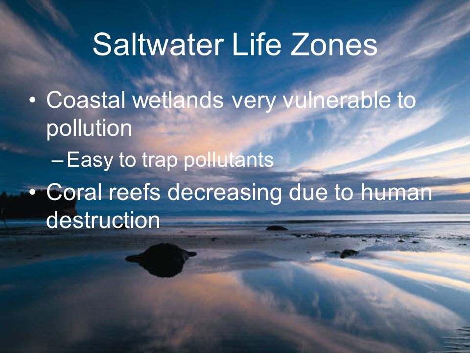Saltwater Life Zones Coastal wetlands very vulnerable to pollution –Easy to trap pollutants Coral reefs decreasing due to human destruction