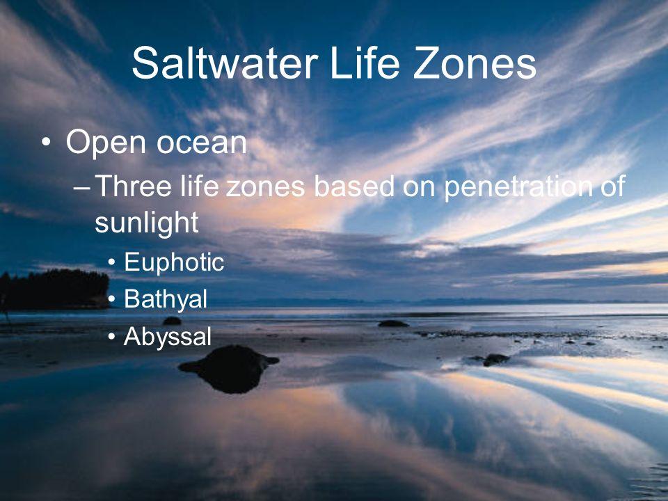 Saltwater Life Zones Open ocean –Three life zones based on penetration of sunlight Euphotic Bathyal Abyssal