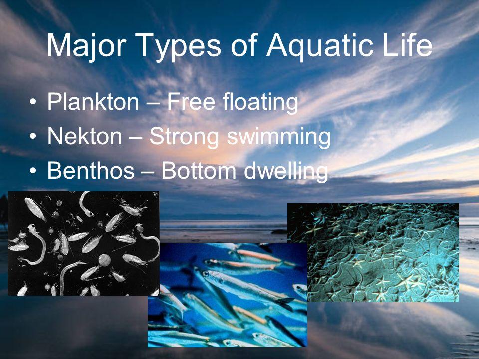 Major Types of Aquatic Life Plankton – Free floating Nekton – Strong swimming Benthos – Bottom dwelling