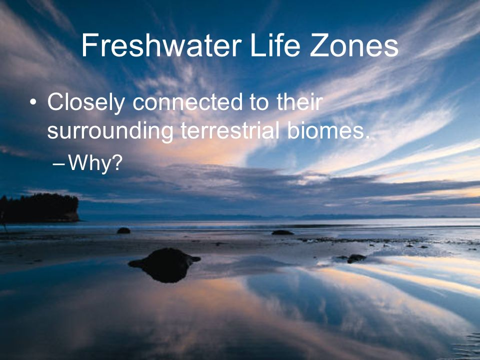 Freshwater Life Zones Closely connected to their surrounding terrestrial biomes. –Why?