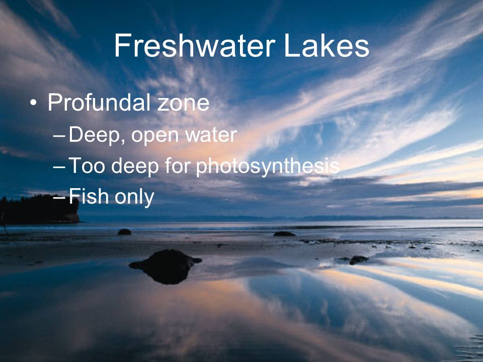 Freshwater Lakes Profundal zone –Deep, open water –Too deep for photosynthesis –Fish only