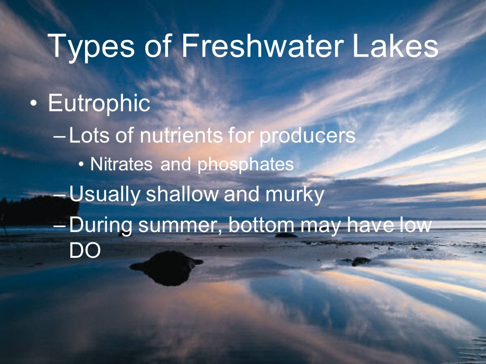 Types of Freshwater Lakes Eutrophic –Lots of nutrients for producers Nitrates and phosphates –Usually shallow and murky –During summer, bottom may hav