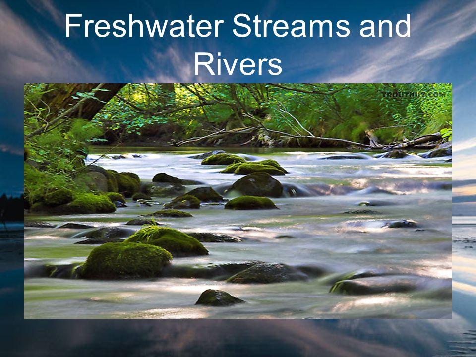 Transition zone –Deeper channels –Slower water –Warmer water