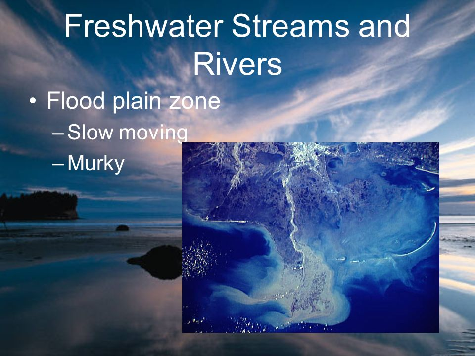 Freshwater Streams and Rivers Flood plain zone –Slow moving –Murky