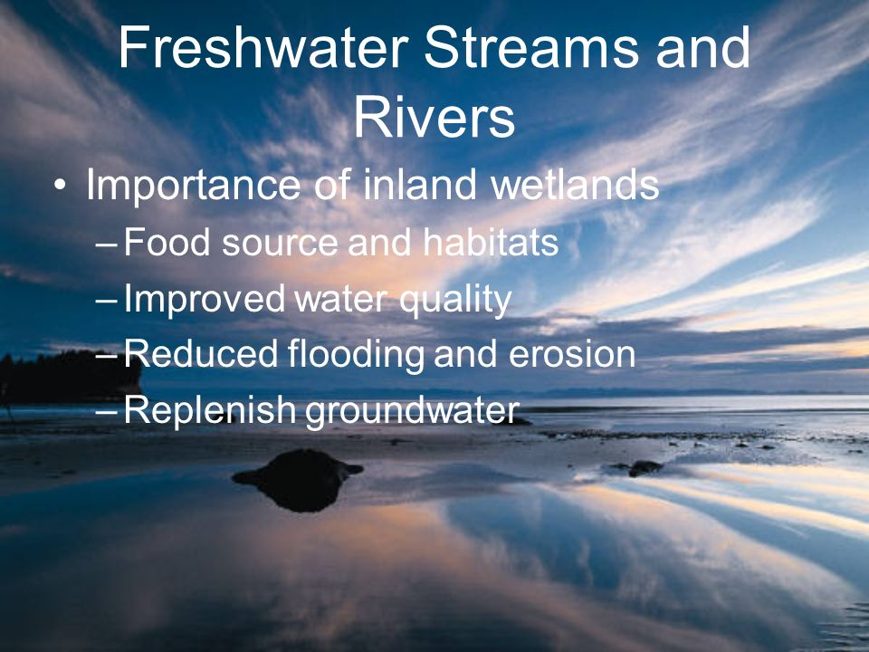 Freshwater Streams and Rivers Importance of inland wetlands –Food source and habitats –Improved water quality –Reduced flooding and erosion –Replenish