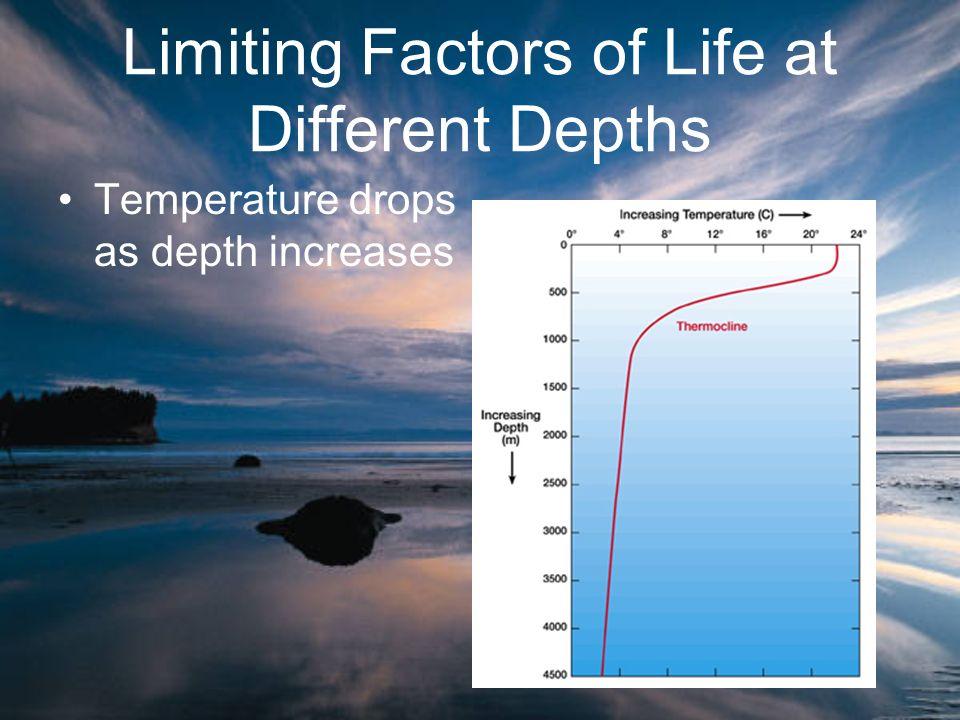 Limiting Factors of Life at Different Depths Temperature drops as depth increases