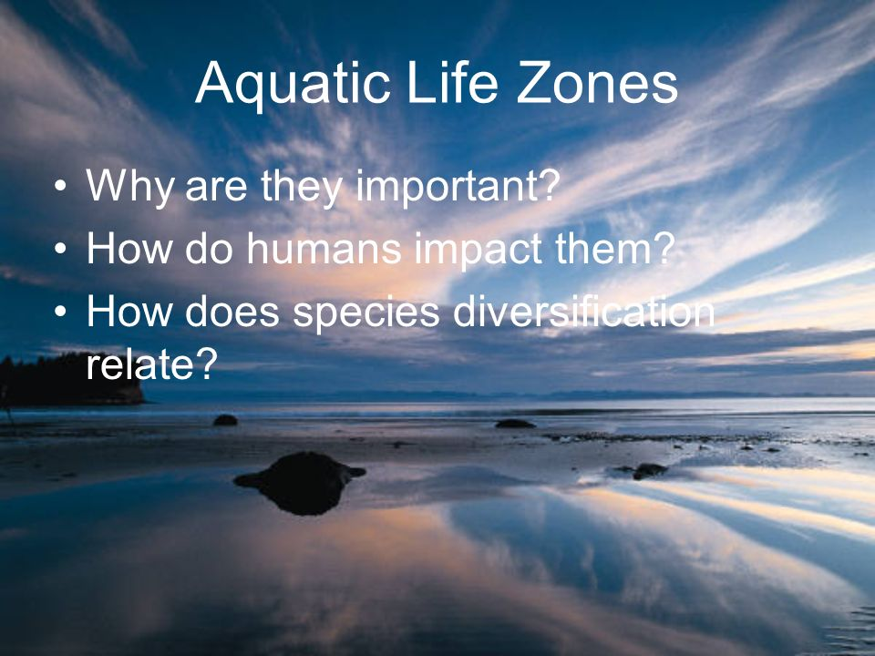 Aquatic Life Zones Why are they important? How do humans impact them? How does species diversification relate?