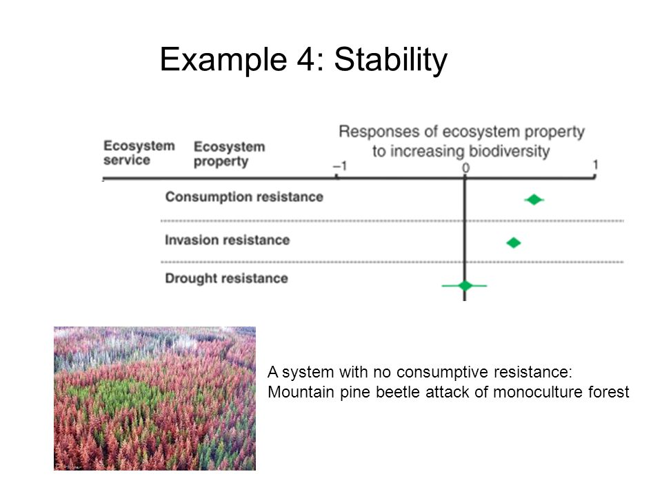 Example 4: Stability A system with no consumptive resistance: Mountain pine beetle attack of monoculture forest