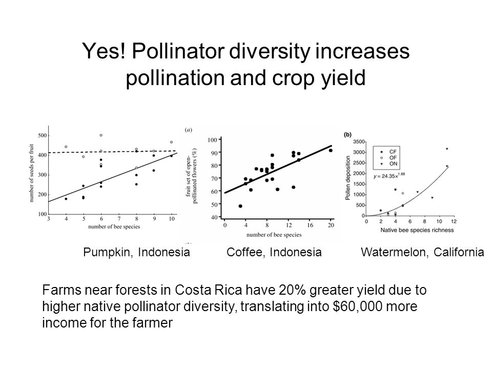 Yes! Pollinator diversity increases pollination and crop yield Pumpkin, Indonesia Coffee, Indonesia Watermelon, California Farms near forests in Costa