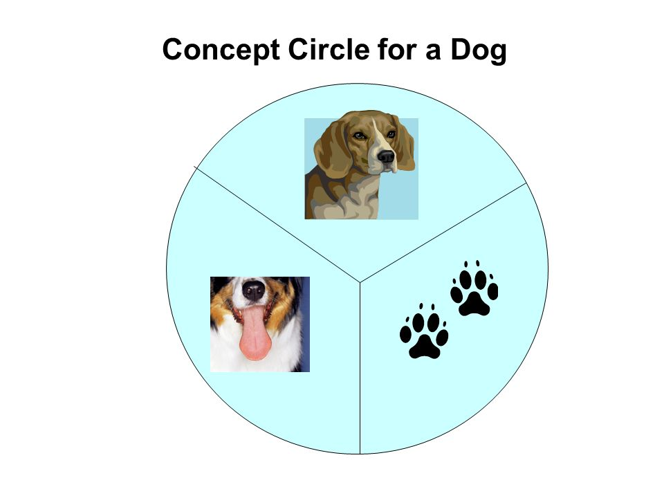 Concept Circle for a Dog