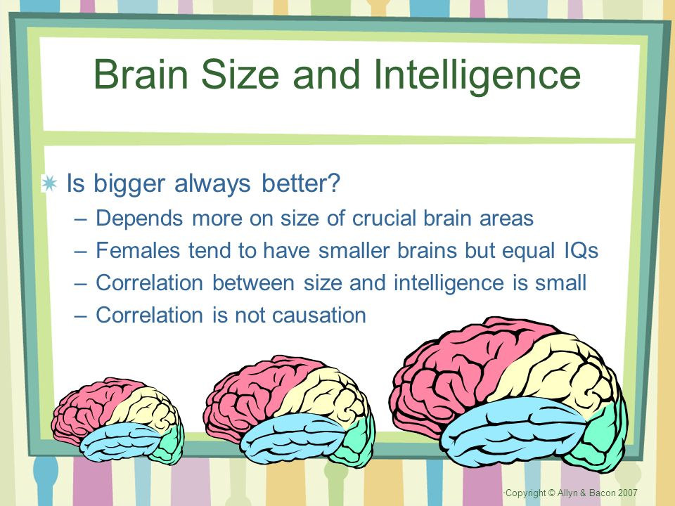 Copyright © Allyn & Bacon 2007 Brain Size and Intelligence Is bigger always better? –Depends more on size of crucial brain areas –Females tend to have