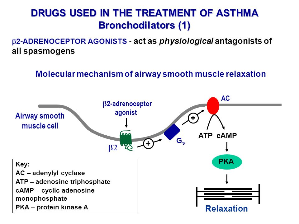 DRUGS USED IN THE TREATMENT OF ASTHMA Bronchodilators (1) 2-ADRENOCEPTOR AGONISTS - act as physiological antagonists of all spasmogens Molecular mecha