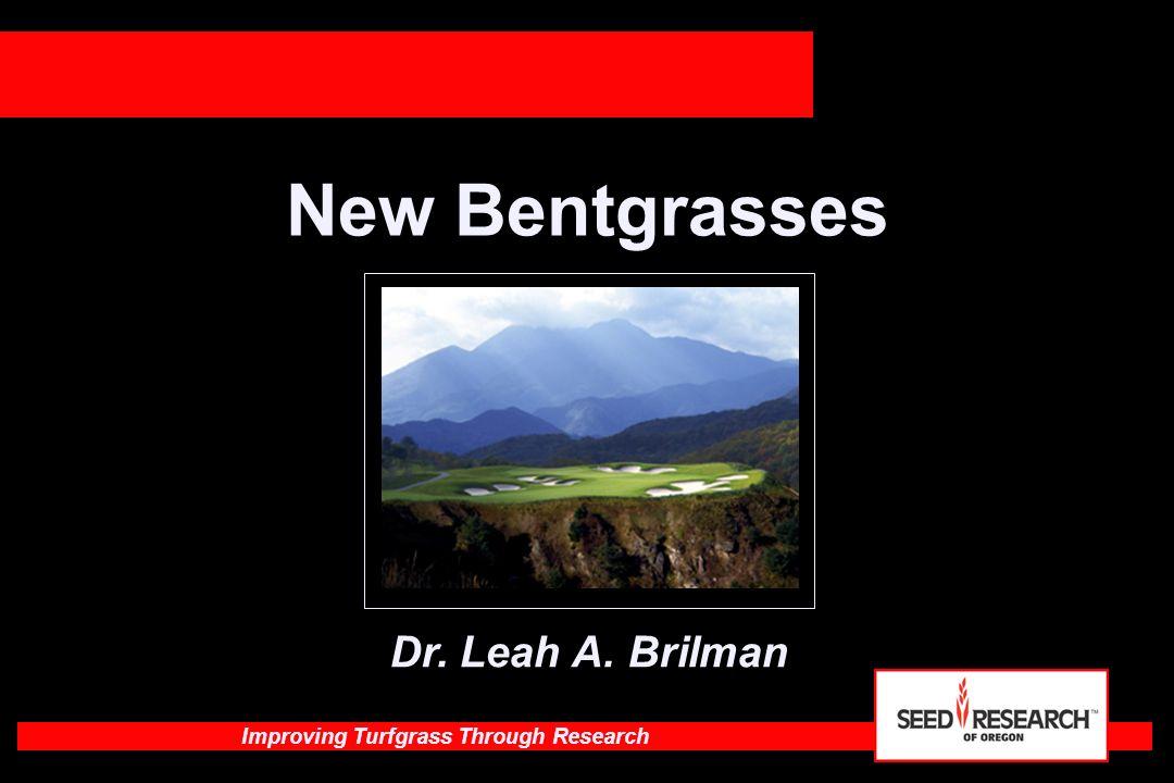 Improving Turfgrass Through Research MacKenzie Creeping Bentgrass Rutgers, NJ Greens established 2003 August, 2006 38 degrees C 95% humidity High Density, growing Kingpin Mackenzie